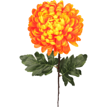 Chryzantema pojedynka pomarańczowa 80 cm