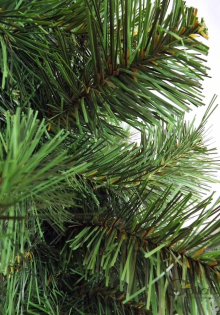 Mała choinka-zielony świerk
