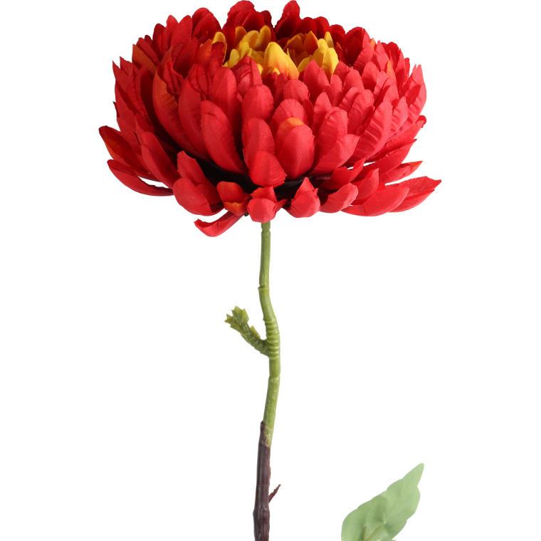 Chryzantema pojedynka czerwona 80 cm
