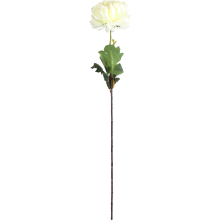 Chryzantema pojedynka biała 80 cm