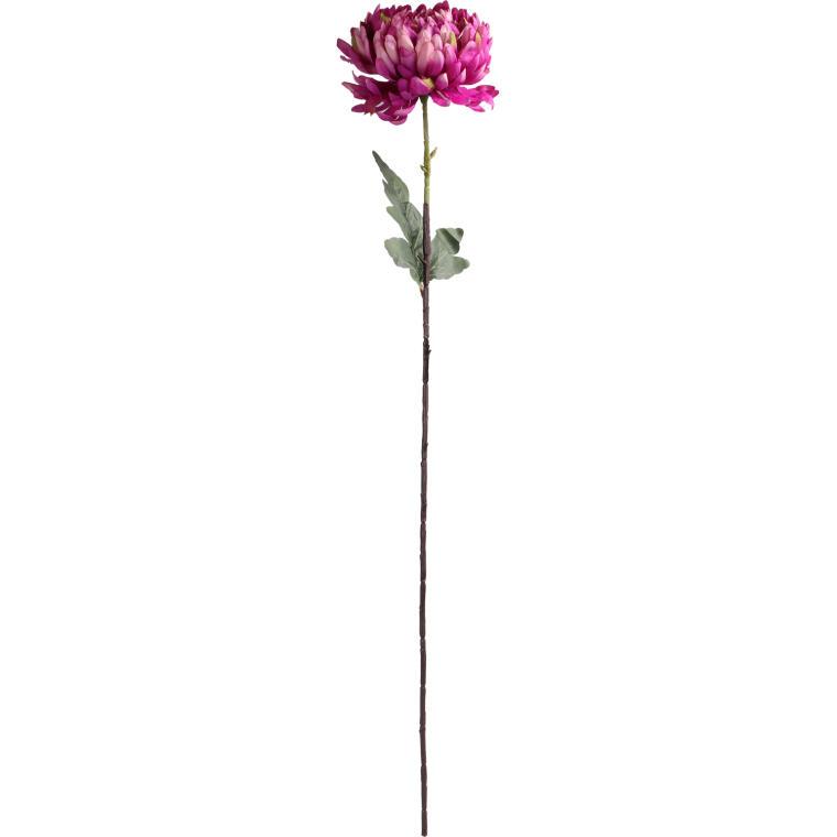 Chryzantema pojedynka fioletowa 80 cm