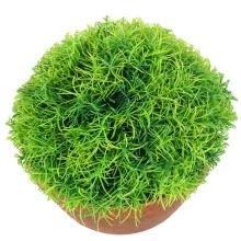 Trawa-kula w donicy 25 cm