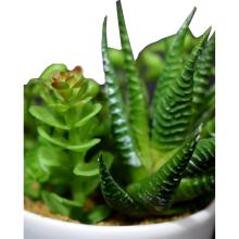 Mix sukulentów w białej ceramicznej doniczce z rączką