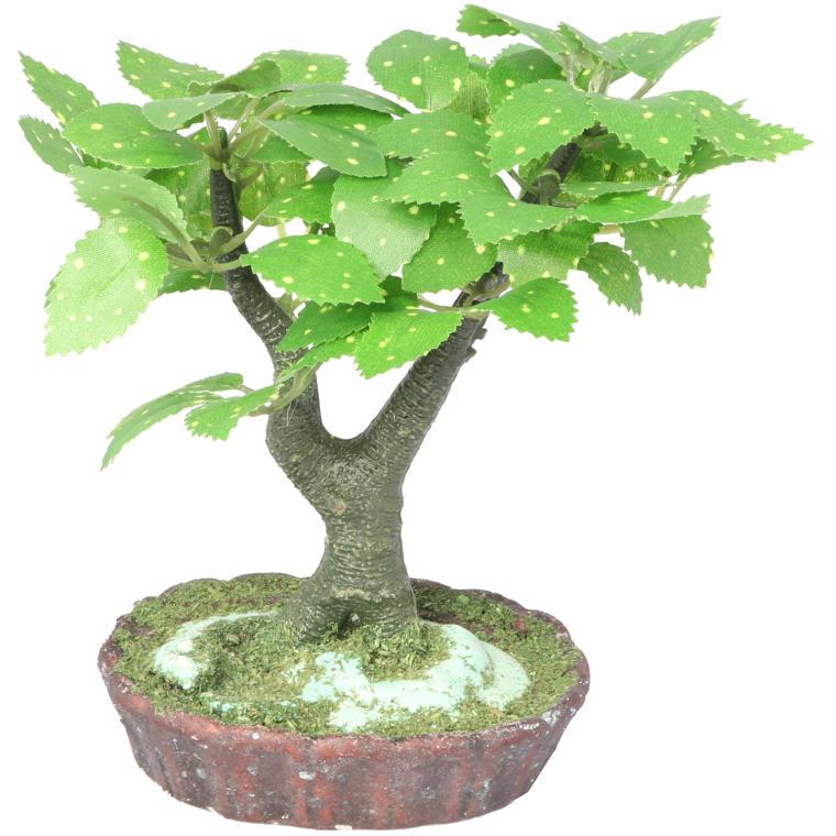 Drzewko bonsai z biało zielonymi listkami
