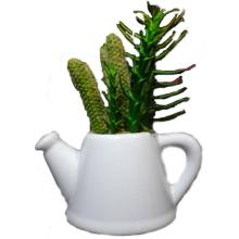 Mix sukulentów w białej ceramicznej konewce
